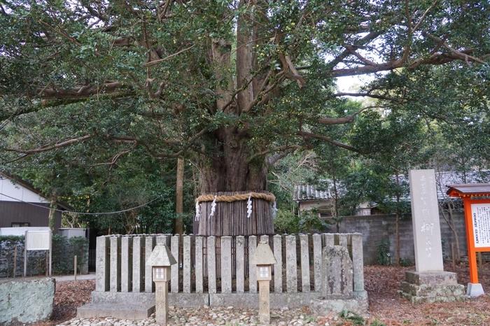 参道にあるご神木、通称「ナギの大樹」は、樹齢1000年とも言われる大樹です。旅の安全や夫婦円満を祈ることができるとされているので、ぜひ立ち寄ってみましょう。ご神木のナギの実を奉製したお守りもあるそうです。