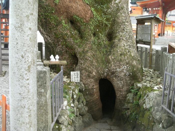 境内には、樹齢850年、平重盛が手植えをしたと伝わる、ご神木のクスノキがあります。幹の部分が空洞化していて、護摩木を持って通り抜けができるそうです。(※護摩木をいただく初穂料がかかります。)