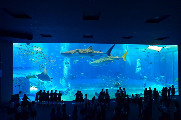 沖縄の水族館といえば「沖縄美ら海水族館」!定番ではありますが、冬でも人気の観光スポットです。巨大水槽には、ジンベイザメの優雅に泳ぐ姿が見学できますよ。館内の各フロアでは、沖縄の海についていろいろと学べます。また、東シナ海を一望できるレストラン「イノー」もありますので、ぜひお食事もお楽しみください。