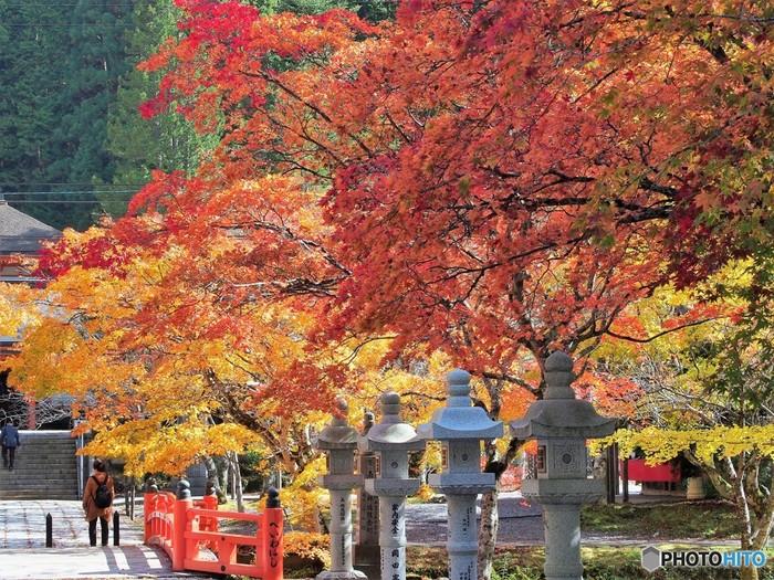 弘法大師・空海が開いたと言い伝えられ、日本を代表する宗教都市である高野山。「紀伊山地の霊場と参詣道」として、世界遺産に登録されています。仏教の伝統を感じながら巡ってみれば、身も心も引き締まった気分になれるはず。 高野山へは、大阪のなんばからは南海高野線で「極楽橋駅」まで急行を使い約2時間、「特急こうや」を使えば約90分で行くことができます。「極楽橋駅」から「高野山」までは、南海高野山ケーブルを使い約5分で到着です。高野山駅から高野山内へは、南海りんかいバスをどうぞ。