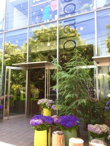 地下鉄表参道駅B3出口から220m。 デンマーク出身のフラワーアーティスト・ニコライ・バーグマンがプロデュースしたカフェ。外観からもわかる通り、お店の内外は季節の花や植物によって美しく彩られています。