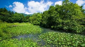 仙石原が美しいのは秋だけではありません。隣接する「箱根湿生花園」では約1700種の植物が出迎えてくれます。箱根で自然を満喫したいときにはぴったりの場所です。(冬季は休園しています。)