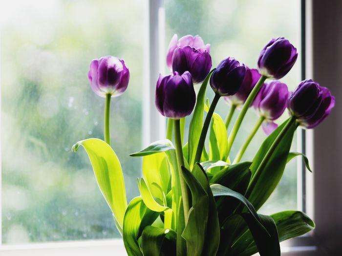 紫色のチューリップの花言葉は「永遠の愛」です。 ミステリアスなカラーと相まって、ちょっと大人な恋を思わせますね。