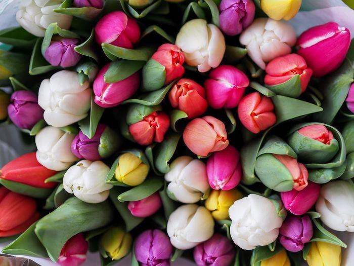 チューリップ とひとことで言っても、その種類や色は非常に豊富です。現在は品種改良も進み、海外品種も合わせると約8,000種ほどはあると言われているんですよ!花びらの形から咲き方まで実に様々で飽きもきませんし、組み合わせ次第でオリジナリティのある花壇を作ることができます。一生かかっても全種類とはお目にかかれない、それがまた魅力となっているお花なんです。