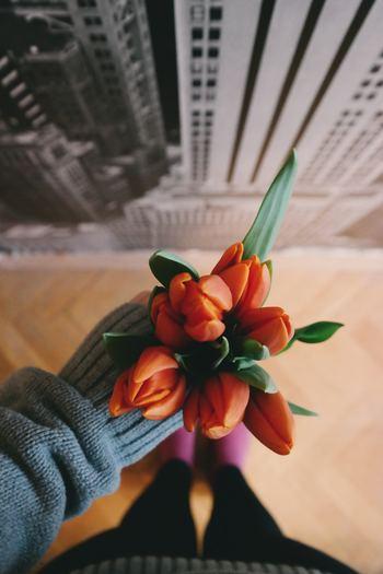 チューリップの学名は「Tulipa gesneriana(ツゥリッパ・ゲスネリアーナ)」といい、その由来はトルコ語の頭巾「Tulipan」だと言われています。チューリップ(tulip)はその「Tulipa」を英語にしたものなんですよ。  そして和名もあります! それが『鬱金香(ウコンコウ)』。日本で知っている方はほとんどいないのではないでしょうか?