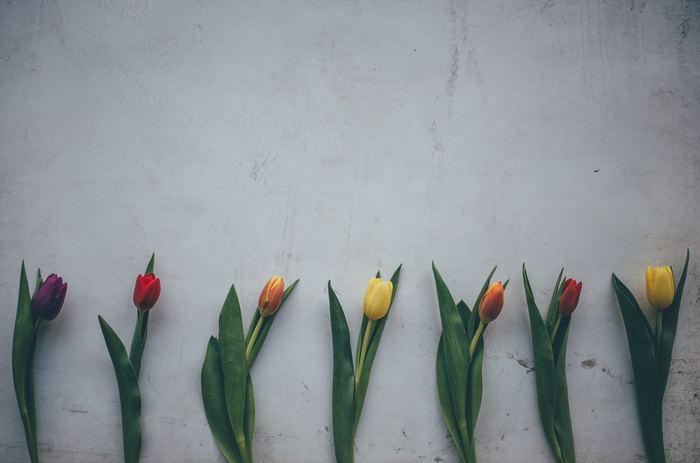 チューリップ全般の花言葉は「思いやり・博愛」「魅惑」です。 でも花言葉は、色によってまた少しつづ変わってくるんですよ。  今回は色別に、チューリップの花言葉をもっと詳しく見ていきましょう!