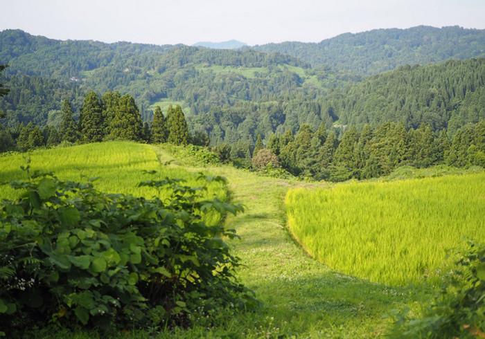 広大な自然が広がる新潟県上越市安塚区の大原集落。この土地の食の恵みをデザインするプロジェクト「ŌHARA CRAFT」とキッチントラック「Mullet(マレット)」のコラボレーションにより「麹チーズケーキ」が誕生しました。  大原集落の棚田で育つコシヒカリから手作りした玄米甘酒をはじめ、できる限り生産者の顔や生産環境がわかる素材を選んで、一つひとつ丁寧に焼き上げられています。