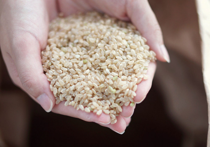 「麹チーズケーキ」のやさしい甘さは、生クリームを使わず、玄米甘酒を使用することで生まれています。 玄米甘酒の原料となるお米は、山奥の天水田で生育中は農薬を使わず、できる限り環境に負荷をかけずに栽培されたもの。「納得して食べられるものを」と少量のみ大切に育てている貴重なお米です。