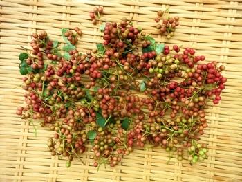 花椒には「赤花椒」「青花椒」の二種類があげられ、広く浸透しているのが、こちらの「赤花椒」です。  赤く完熟してから収穫され、実の状態から専用のミルで粉にします。
