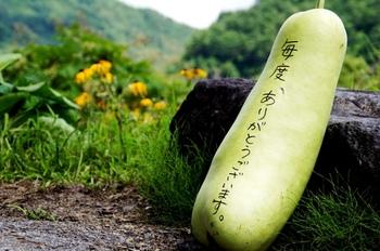 日本でも古くから親しまれてきた冬瓜は煮たり焼いたりサラダにしたり食べ方も色々楽しめますよね。カロリーも低く、利尿作用があるのでむくみ防止やデトックス効果も期待できます。そんな嬉しい冬瓜を色々アレンジして美味しくいただいちゃいましょう!