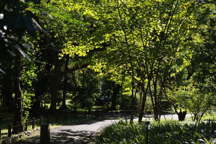 皇居から続く緑がいっぱいの、落ち着く公園です。多くの観光客が訪れるほか、丸の内、大手町界隈に努めている人たちにも愛される美しい公園です。