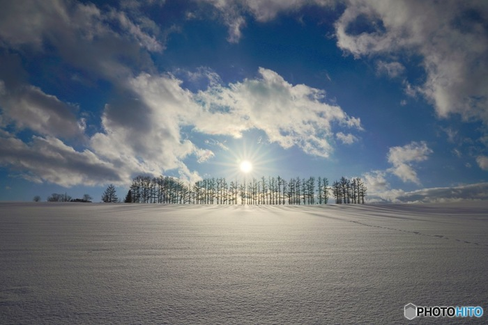 美瑛エリアには「マイルドセブンの丘」「ケンとメリーの木」など、CMやポスターの風景になったことから名付けられた木や風景があちこちにあり、冬には夏とは全く違う凛とした姿を見られます。名所の多くが農地などの私有地なので、撮影の際はマナーを守ってくださいね。