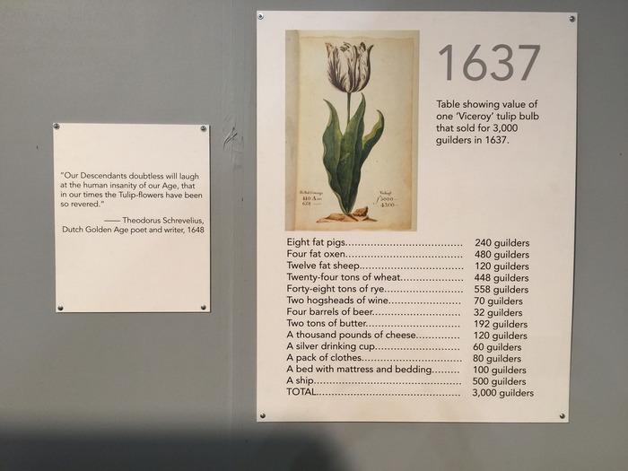 チューリップは1600年代の大昔に、オスマン帝国という異国の地からオランダに輸入されました。その花の美しさに魅了される人は多く、あまりの人気から他の国からも注文が入るほど球根の値段が高騰。ピーク時には、珍しいチューリップは6,000ドル~8,000ドルの高値がつくこともあり、金よりも価値があったといいます。  しかし1637年 2月 3日に、球根の値段がピーク時の100分の1以下まで急落したことでオランダ経済は大混乱に陥りました。このことは「世界最古のバブル経済事件」として歴史に残るほどの大事件だったんですよ。