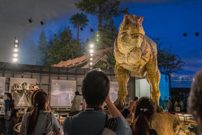 映画「ジュラシックパーク」のワンシーンのような迫力の恐竜が展示されている「福井県立恐竜博物館」は、多くの恐竜化石が発見された勝山市にあります。恐竜骨格や標本、ジオラマなどを展示し、2000年の開館以来、通算入場者数が1000万人を超えた人気スポットです。中でも、恐竜化石の発掘現場をそのまま展示し、発掘体験ができる「野外恐竜博物館」は興味深いですね。