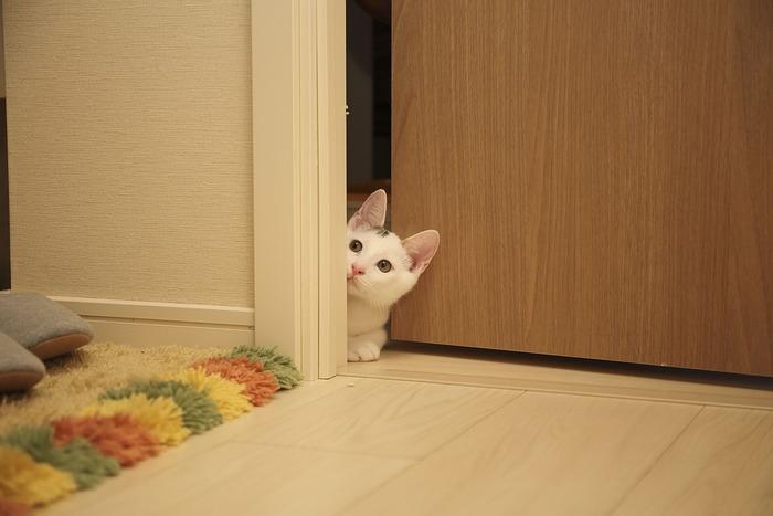 お店やレストランなどに出入りする際、扉を開けた人は後ろから入ってくる人がいる場合、次の人が扉に手をかけるまで扉を開けたまま待ってあげるのがマナーです。