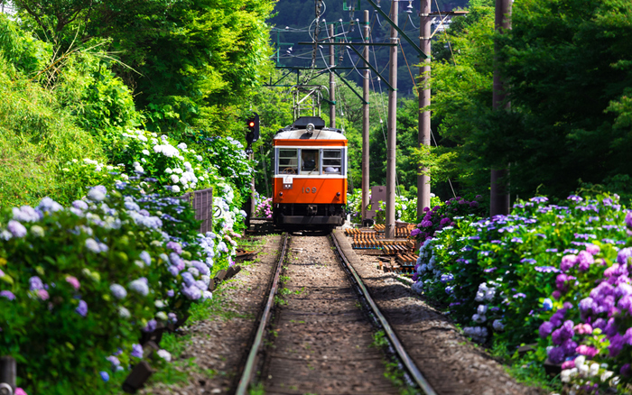 「箱根」は神奈川県の西側にあり、都心からのアクセスがよい観光・温泉地です。紫陽花や紅葉など、四季折々の豊かな自然の風景を楽しむことができ、また、美術館やレジャー施設も充実。いろいろな楽しみ方ができる魅力的な町です。 ですが、たくさんのスポットがあるゆえに、「どこへ行ったらいいのか」と悩んでしまうもの。今回は1度は訪れたい名所をご案内します。