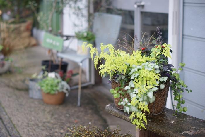 お花屋さんが併設しているだけあって、お店の外にはたくさんの植物が並んでいます。お食事の後はぜひ花屋さんもご覧になって、美しいお花にも癒されてみてはいかがでしょうか。