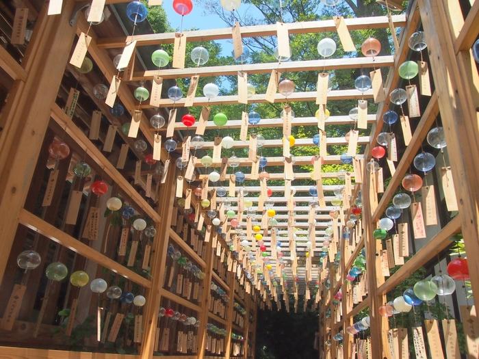 川越氷川神社の初夏には、境内にある風鈴棚に涼し気なかざぐるまが飾られます。そして7月からは、願い事が書かれた短冊をかけた2,000個以上の江戸風鈴が飾られる「縁むすび風鈴」がスタート。川越氷川神社に残る「光る川伝説」にちなみ、イベント期間中の19時~21時までの間は天の川に見立てて境内の小川をライトアップ。風鈴の音色に合わせて、涼やかな光の瞬きを感じることが出来るのだそう♪初日にはそれまで飾られていたかざぐるまが配布され、風鈴は9月初旬まで楽しめます。