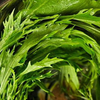 そして芽キャベツ同様、ビタミンC、βカロテンが豊富でカルシウムや鉄分も豊富に含まれた理想的な栄養バランスを持った水菜もこの時期が旬です。暴飲暴食が続いた冬の胃腸を整えてくれたり、免疫力を高め風邪になりにくい体を作ってくれる野菜が出回るのも「旬」だからこそと納得できますね。