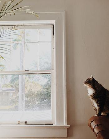 閉め切ったお部屋の空気は、ハウスダストや二酸化炭素、湿気などで想像以上に汚れているもの。デトックスしたお部屋で気持ちよくすごすには、毎日の換気が欠かせません。 お部屋の空気を入れ替えるには、一般的な広さであれば5分ほど窓を開けておくだけでOK。朝の澄んだ空気を一日の始まりに取り込んで、大きく深呼吸するのもいいですね。
