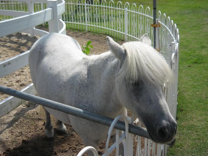 たくさんの馬と触れ合えることで人気の「三木ホースランドパーク」。乗馬はもちろん、にんじんタイムには手から人参をあげることができたり、きゅう舎の見学をしたりすることもできます。入館料が無料という点も嬉しいポイントです。