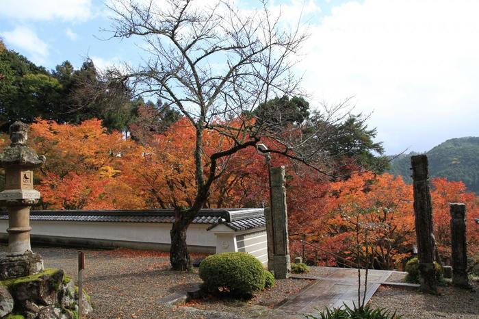 丹波紅葉三山のひとつ「円通寺」。足利義満が後円融天皇の勅命によって創った曹洞宗のお寺です。紅葉でとても有名な名所で秋になると多くの観光客で賑わいます。参道には紫陽花が約100株植えられており、梅雨時にはその美しい風景を味わうことができます。