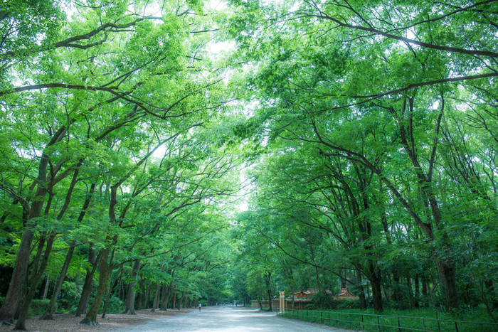 """下鴨神社には""""糺の森(ただすのもり)""""と呼ばれる、参道に広がる広大な森があります。太古の原生林がいまなお残る、神聖な雰囲気を漂わせている森は、四季折々違った表情を見せてくれる場所であり、地元の方にも愛されている癒しスポットとなっています。"""