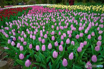 甲子園球場6個分とも言われている園内には、約12,000種類、約12万本もの植物が植えられています。日本最大級の温室もあり、世界の熱帯植物を観察することもできます。4月頃には桜に負けず美しいチューリップ畑も見ごろになりますよ♪京都の街歩きに疲れた方は、ホッと一息つける癒しのスポットとして訪れてみてはいかがでしょうか?