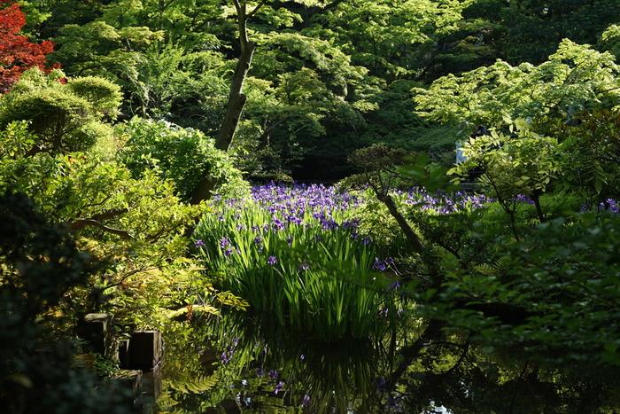 庭園の美しさは古美術のコレクションと相まって、心を豊かにしてくれる気がします。