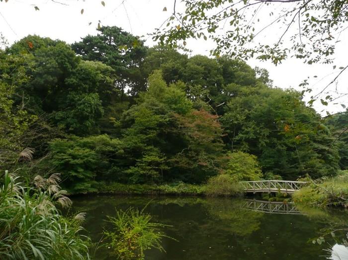 写真だけを見ると東京の中心地とは思えませんよね。 整えられていない、ありのままの自然がそのまま残っている奇跡的な場所です。