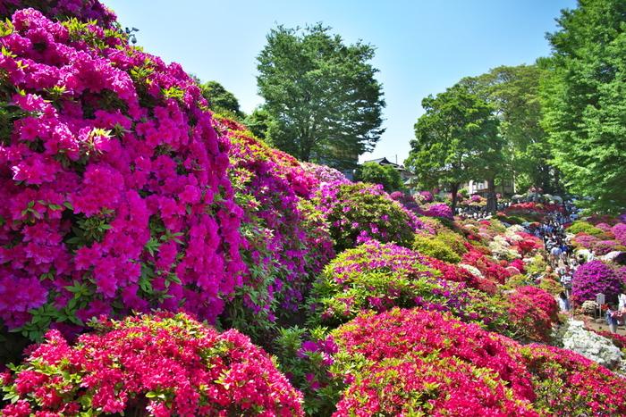 境内にはツツジ苑もあり、季節になると3000株ものツツジが咲き誇るそうです。 見頃は4月なので、暖かい季節のお散歩にもうってつけですね。 4月から5月にかけて『つつじまつり』も開催されます。