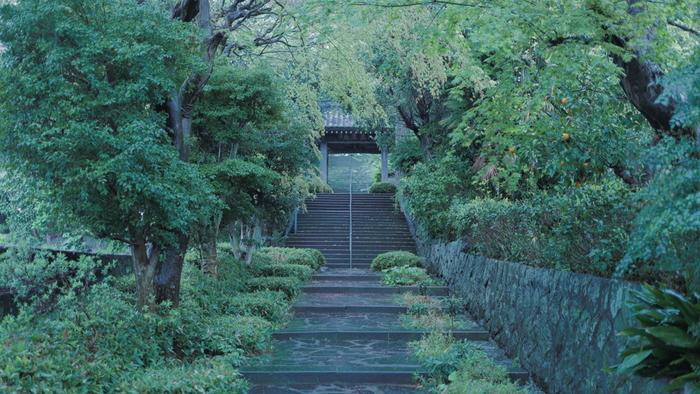 湯河原駅から徒歩10分ほどの場所にある、成願寺。推定樹齢800年のビャクシンの巨木にも会ってきてください。