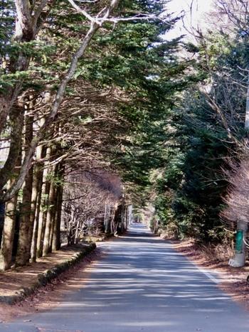 軽井沢に来たら、森林の小道を散策したいですよね。