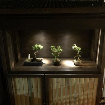 松や紅葉などの盆栽を、センスよくニッチにディスプレイして和の空間を。ニッチに余白を持たせることで、洗練された印象に。