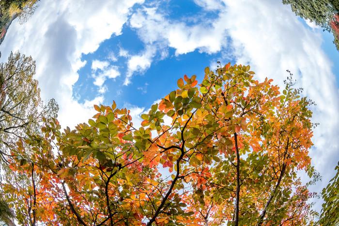 普段は元気なのに、季節の変わり目になると頭痛や気分の落ち込みなどの症状が出る人もいますよね。それは自律神経からくる不調かもしれません。