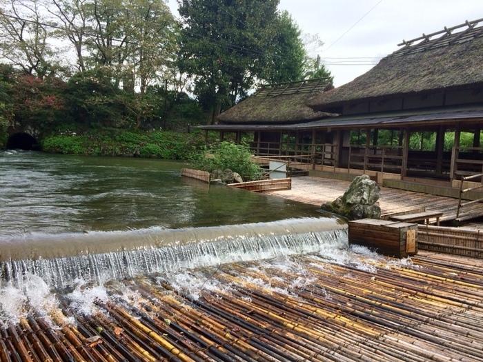 時折、川から鮎が流れ落ちてくる光景も。水の流れ落ちる音を聞きながら、ここでしか味わえない新鮮な鮎料理を堪能してみませんか?
