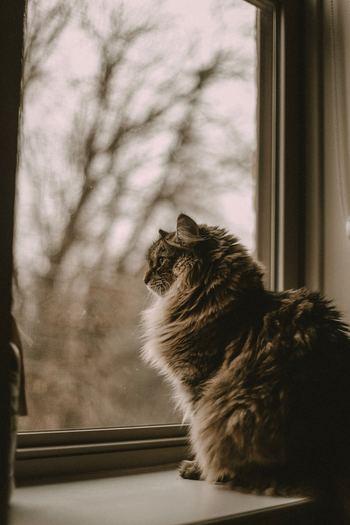 あなたはなぜ「丁寧な暮らし」をしたいか、考えたことはありますか。「ごはんがおいしい」「生活そのものが楽しい」「家ですごす時間が心地いい」といった、ささやかな幸せを積み重ねていきたいと思ったからではないでしょうか。 「丁寧な暮らし」の先にあるのは、そんな心豊かにすごす毎日なのです。自分とは無縁だ、縁遠いと思っていた方も、ずいぶんと身近に感じられるのではないでしょうか。