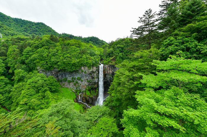 日光の春の訪れは、都心にくらべると遅めで、GW頃に新緑の季節を迎えます。春は山から雪解け水が流れてくるので、水量が多くなり迫力があります。生き生きとした緑に覆われた華厳の滝は、冬とは違う優美さを感じさせてくれます。