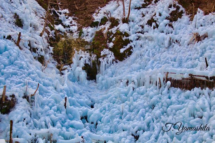 芦ヶ久保地区で開催されている「あしがくぼの氷柱」は、秩父三大氷柱の一つ。山の傾斜を利用して沢水をホースやスプリンクラーで散水して氷柱を作っていて、高さ約30メートル、幅125メートルに渡り、一面に幻想的な氷の世界が広がります。