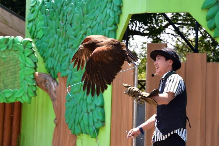 ハリスホークやベニコンゴウインコのバードショーも人気です。鳥たちの特技が見られたり、迫力あるフライト姿は、家族みんなで楽しめますよ。