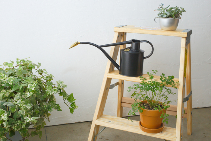 玄関を清々しくておしゃれな空間にするために、素敵な観葉植物をインテリアに取り入れてみませんか? 今回は風水から見た植物の選び方にもふれながら、おすすめの観葉植物やおしゃれな飾り方をご紹介します♪