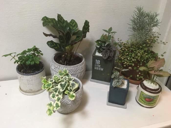アイビーやシュガーバイン、カラテアなど葉っぱに特徴のある植物が印象的です。丸や四角など形の異なる鉢を組み合わせることで、リズミカルでおしゃれな雰囲気に*こんなに素敵なグリーンコーナーがあると、玄関を開けた瞬間ほっと癒されそうですね。
