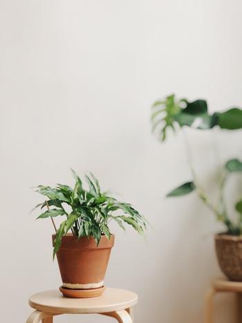 """おしゃれなインテリアとして大人気の「観葉植物」は、飾り方によって様々な雰囲気を演出できます。 また、運気UPにつながる""""開運アイテム""""として、気軽に玄関に取り入れることができるのも大きな魅力です。 今回ご紹介した風水効果もヒントにしながら、お気に入りの観葉植物を選んでみてくださいね。"""