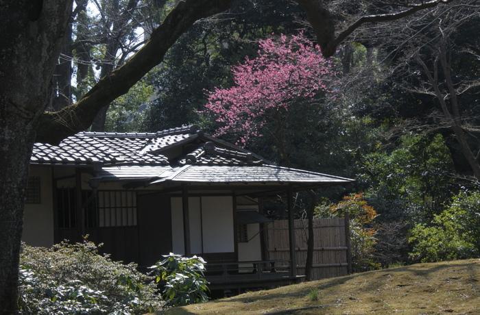 「六義園」は、「小石川後楽園」とともに江戸の二大庭園に数えられる「回遊式築山泉水庭園」です。池や石の橋、あずまやなどがある美しい日本庭園の中で、梅の花を堪能できます。梅の見頃は、2月中旬から3月上旬頃。こちらは宣春亭の傍らに咲いた紅梅。和風建築と梅の花は絵になって趣がありますね。