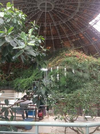 バスターミナルから歩いて15分ほどのところにある「草津熱帯圏」は、1970年開園の歴史ある動植物園。メインスポットの熱帯大ドームは、温泉の熱で暖められていて、南国のよう。冬の子連れ旅は風邪をひかないか心配というママやパパも、ここなら安心ですね。