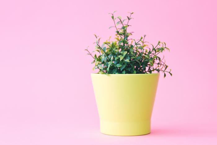 西と相性がいいカラーは「イエロー」と「ピンク」「白」です。西の玄関に観葉植物を飾る際には、イエローやピンク、白のインテリアアイテムを一緒にディスプレイしても素敵ですよ◎。