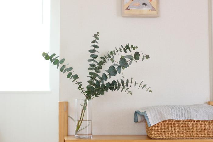 もっともシンプルでベーシックな飾り方がガラスの花器にぽんとユーカリだけをアレンジする方法です。いろいろな方向に向いたユーカリの葉っぱたちの元気がみなぎる様子に惹かれます。