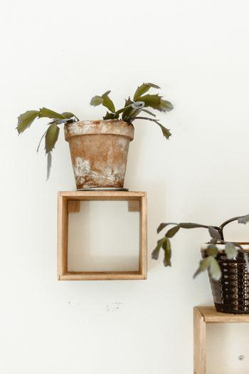 ちょっと個性的な雰囲気にしたい方は、こちらのような壁面を使ったおしゃれなディスプレイもおすすめです。お気に入りの観葉植物をいくつも並べて、素敵な空間を演出してみませんか?