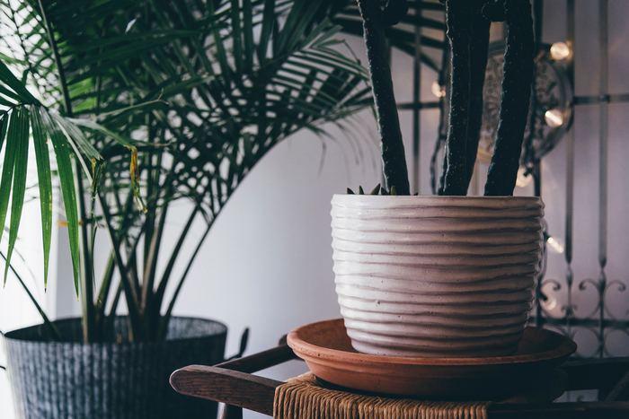 風水として観葉植物をお部屋に飾る場合には、プラスチック製の容器を使用するのはNGとされています。プラスチック容器のままでは植物が持つ自然のエネルギーが発揮できず、風水効果は期待できなくなってしまうそうです。