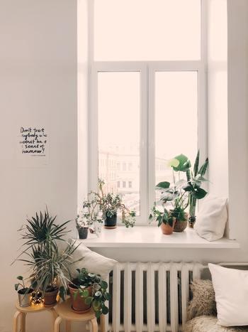 観葉植物は寝室でも開運アイテムです。観葉植物を置くときには「癒し効果」を意識してみましょう。植木鉢は暖色系がおすすめ。寝室は薄暗いので、日光が必要な観葉植物は窓際に置くのがコツ。または日陰を好む観葉植物をチョイスしましょう。